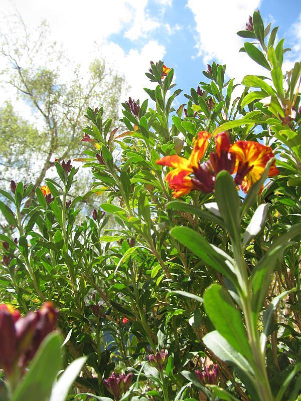 Blumen und Himmel